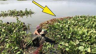 Kinh hoàng ! ổ cá khủng trong đám lục bình trên sông | bắt cá chúa trong lục bình | THÚ VUI MIỀN TÂY