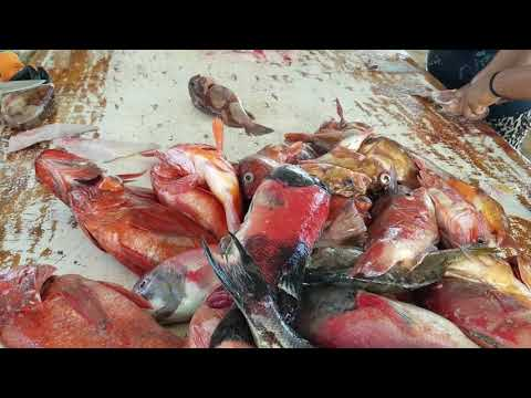 Castros Fishing Camp 2018