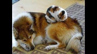 Những cặp song sinh khác loài đáng yêu nhất