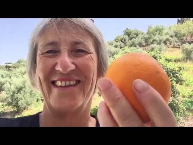 Chiquita #7 Ruzie om één sinaasappel