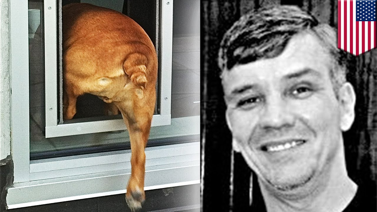 Break In Fail Home Intruder Crawls In Through The Doggy Door Comes