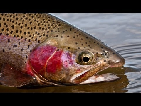 Fly Fishing Arkansas River Pueblo Colorado