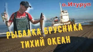 Отдых на Итурупе | Рыбалка.Брусника.Тихий океан