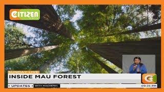Inside Mau forest