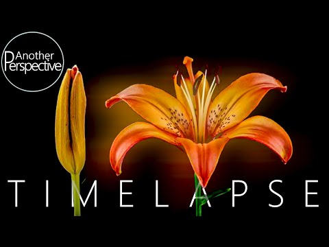Blooming Flower Time Lapse | Macro Photography