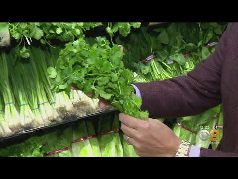 Tip Of The Day: Cilantro