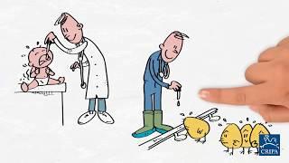 Pourquoi les antibios, chez les animaux? (2 de 6)