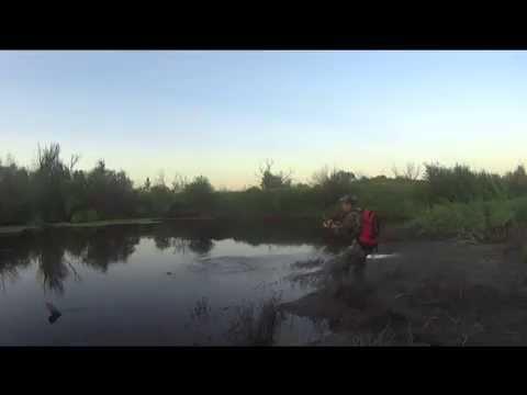 Рыбалка в Омской области. Щука на поворотах реки Оши. - YouTube