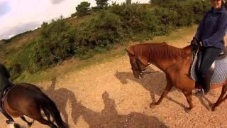 Trail Ride Through Dartmoor