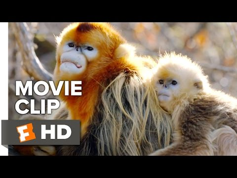 Born in China Movie Clip - Meet Tao Tao (2017)   Movieclips Coming Soon
