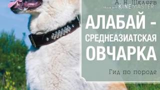 Рассказ о породе собаки Алабай