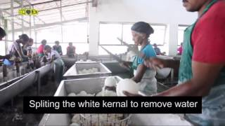 Desiccated Coconut Manufacturing Sri Lanka