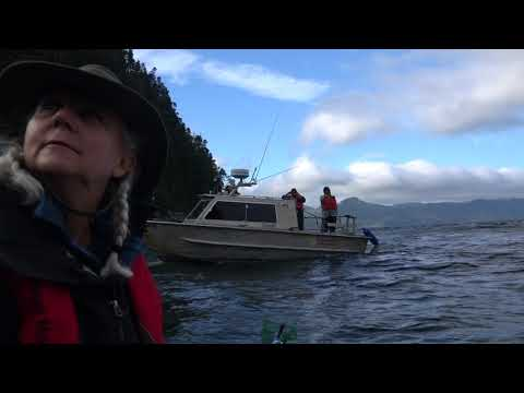 Marine Harvest Harassing Scientists and Sea Shepherd Crew