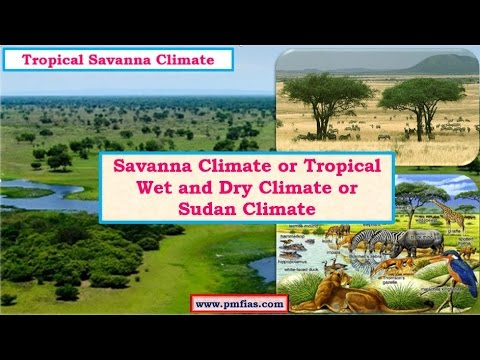 C24-Tropical Savanna Climate - Tropical Wet and Dry Climate - Sudan Climate -  Vegetation, Economy