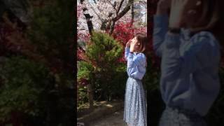 昼前、王子の飛鳥山公園の桜の花を観に散策していたら、テレ朝、ワイド...