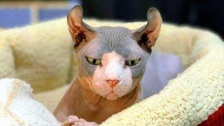 Из-за аллергии кота заперли в одиночестве в другой части дома...