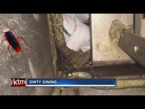 DIRTY DINING: Roaches at Mt. Everest India's Cuisine