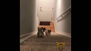 Смех и грех / смотреть смешные видео про животных до слез 2019 (2)