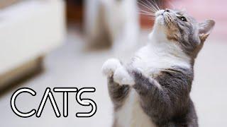Kingdom Animals  Domesticated Cats  القطط الأليفة  GoodVision 4K Ultra HD