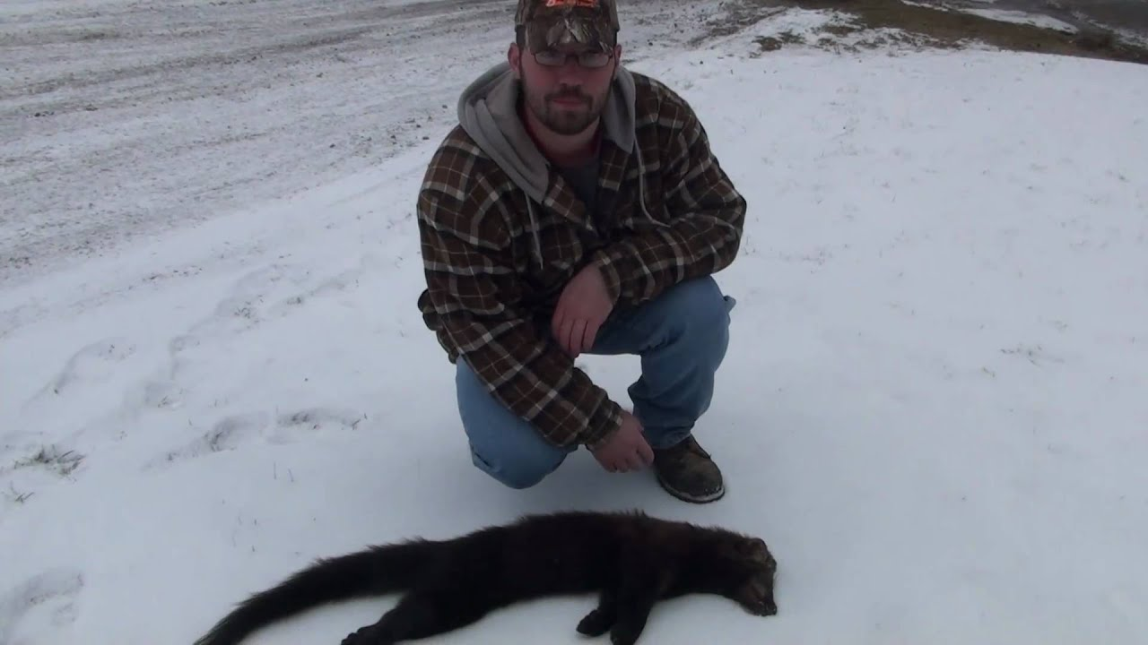 Fisher Trapping Pennsylvania 2010 - YouTube