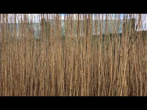 Vegetation Diary: The Texture of Wind