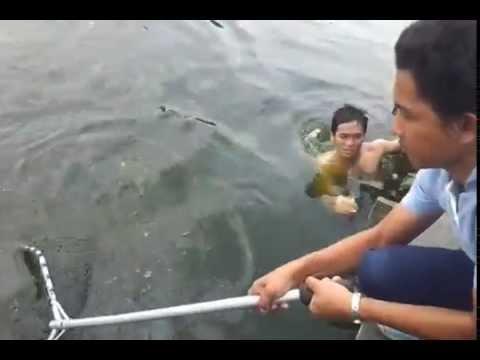 Mekong catfish swim under the pier 52kg