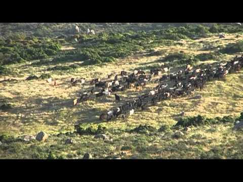 Manzaralar 002 (Barbaros'a doğudan sabah bakışı)