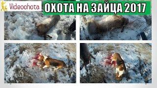 Охота на зайца 2017! ЗАЯЦ-ПРОФЕССИОНАЛ - Videoohota