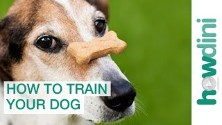 Dog Training with Positive Reinforcement: How to Train a Dog