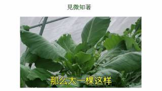 Repeat youtube video 09  自然农法研习班 许素桂主讲
