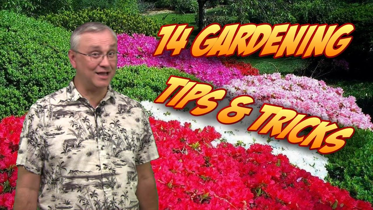 14 Gardening Tips Tricks & Ideas YouTube