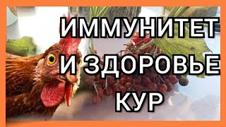 Природные Витамины для Кур Несушек/Куры Несутся Круглый Год/Витаминные Подкормки для Кур Осень,Зима.