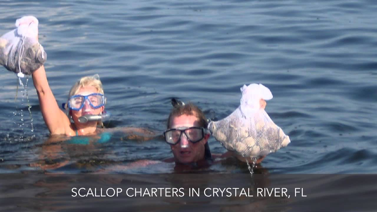 Scallop charters crystal river fl capt franks fishing and for Crystal river fl fishing