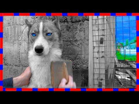 Собака Линяет, Поможем снять ШУБУ