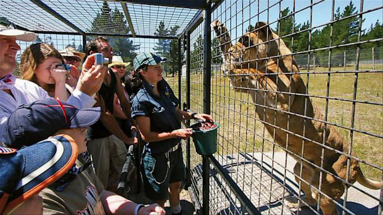 humans-are-caged-so-that-animals-can-roam-freely-in-lehe-ledu-wildlife-zoo-of-china-Duniya Ka Sabse Khatarnak Chidiyaghar