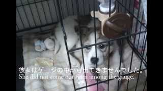 殺処分予定日に我が家にきた犬~Dog came to our house in euthanasia scheduled day.~ thumbnail