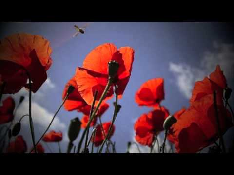 Aga Zaryan - A Parable Of The Poppy