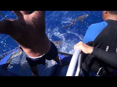 Shark feeding at Bikini Atoll shark pass