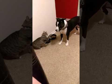 CAT vs DOG?! WHO WILL WIN THE FIGHT??/JustAnneRankin