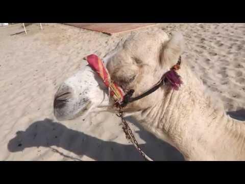 Tunisia Oasis Sahara Travel - HD capture