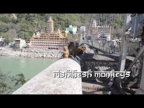 Best of Rishikesh, India  top sights