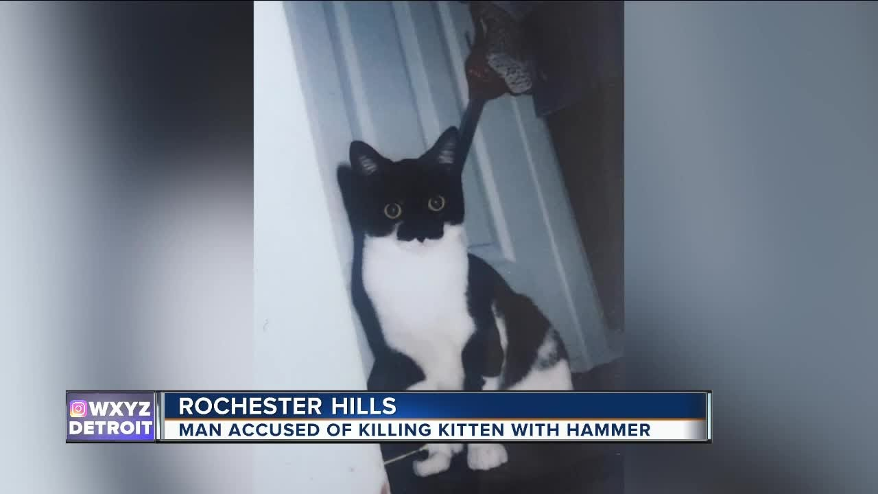 Man Accused Of Killing Kitten With Hammer Youtube