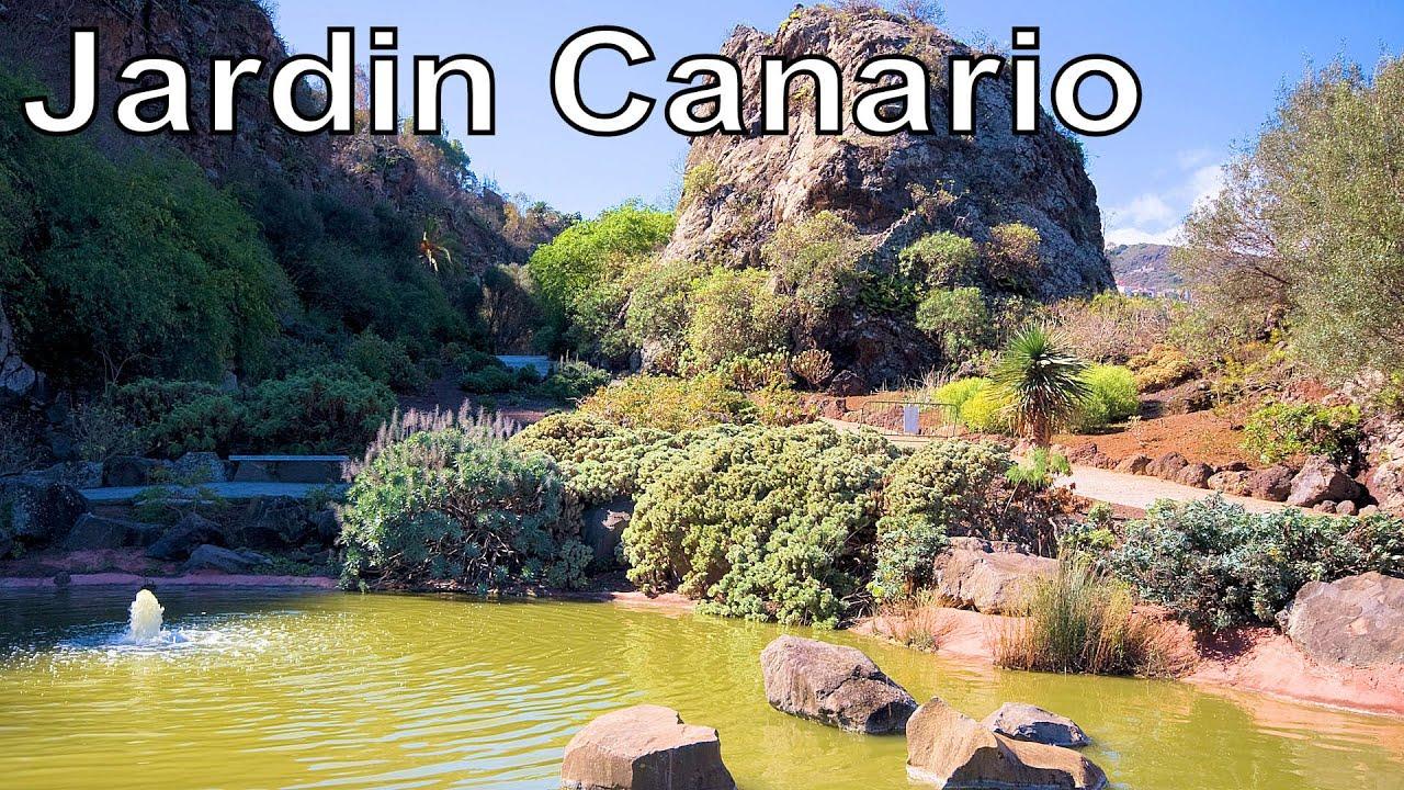 jard n bot nico canario viera y clavijo jardin canario