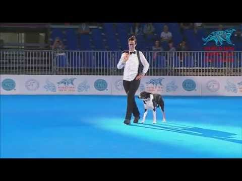 FCI Dog dance World Championship 2016 –Heelwork to music final - Anna Larsson and Flynn (Sweden)