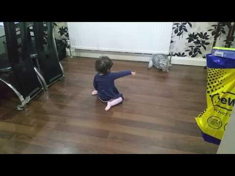 Baby Talks to British Short Hair Cat