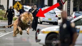10 Animaux qui se sont échappés du Zoo