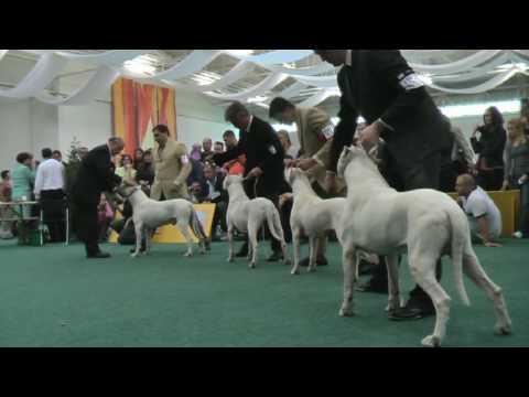 WORLD DOG SHOW  2009 - Bratislava - DOGO ARGENTINO