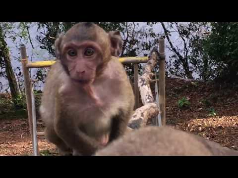 He Is A Gay Monkey I think, He Can't Do it ..lolz.... from YouTube · Duration:  5 minutes 50 seconds