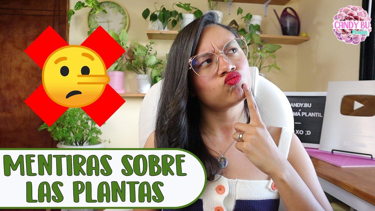 7 MITOS SOBRE LAS PLANTAS DE INTERIOR QUE DEBES DEJAR DE CREER│Candy Bu