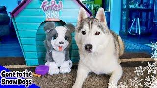 Real Husky vs Fur Real Husky | Husky Reacts